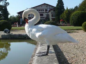 Arnaga Swan