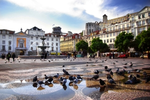 Feed the birds Rossio 5